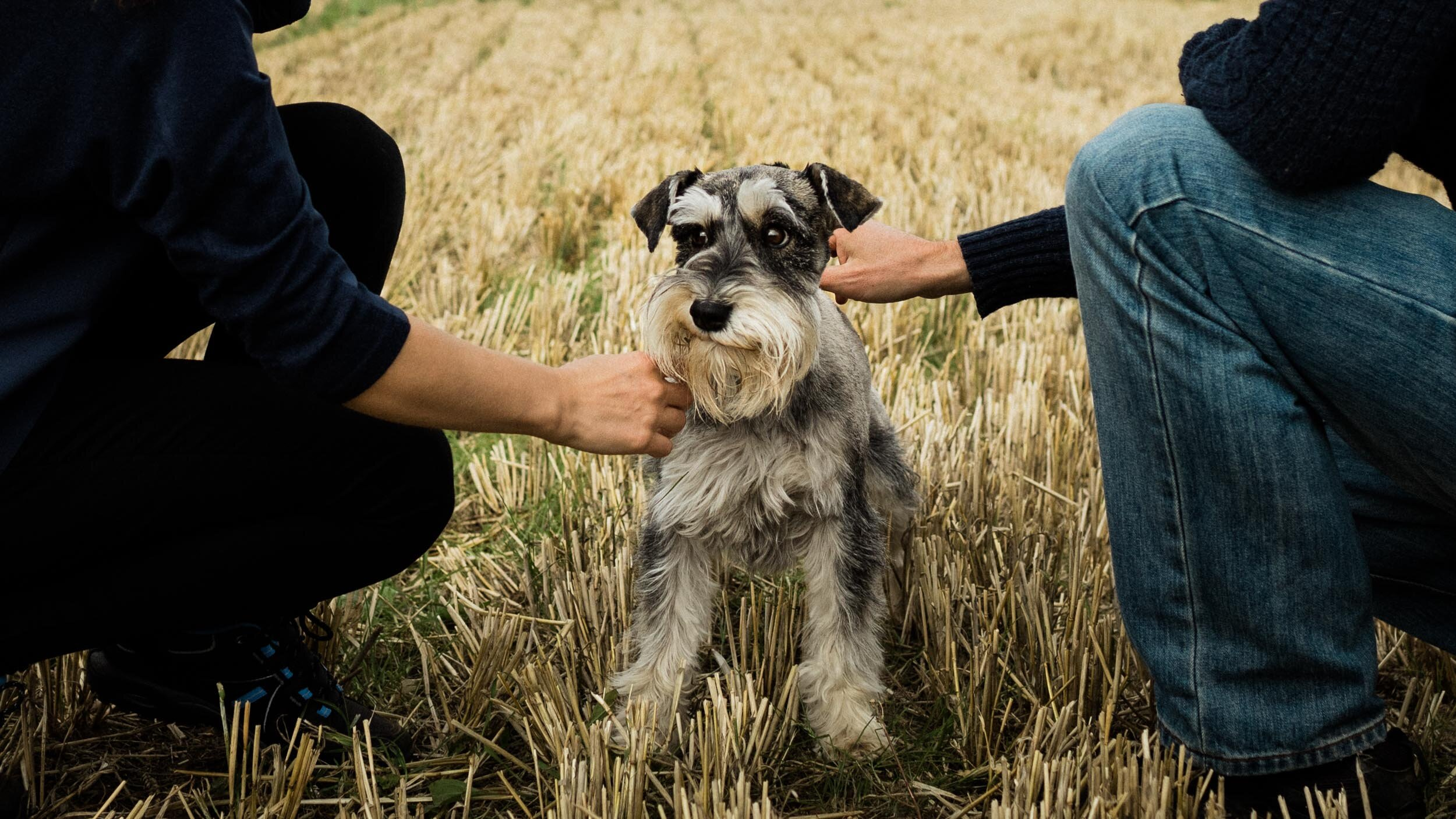 Dog photography - for owners and dog professionals.