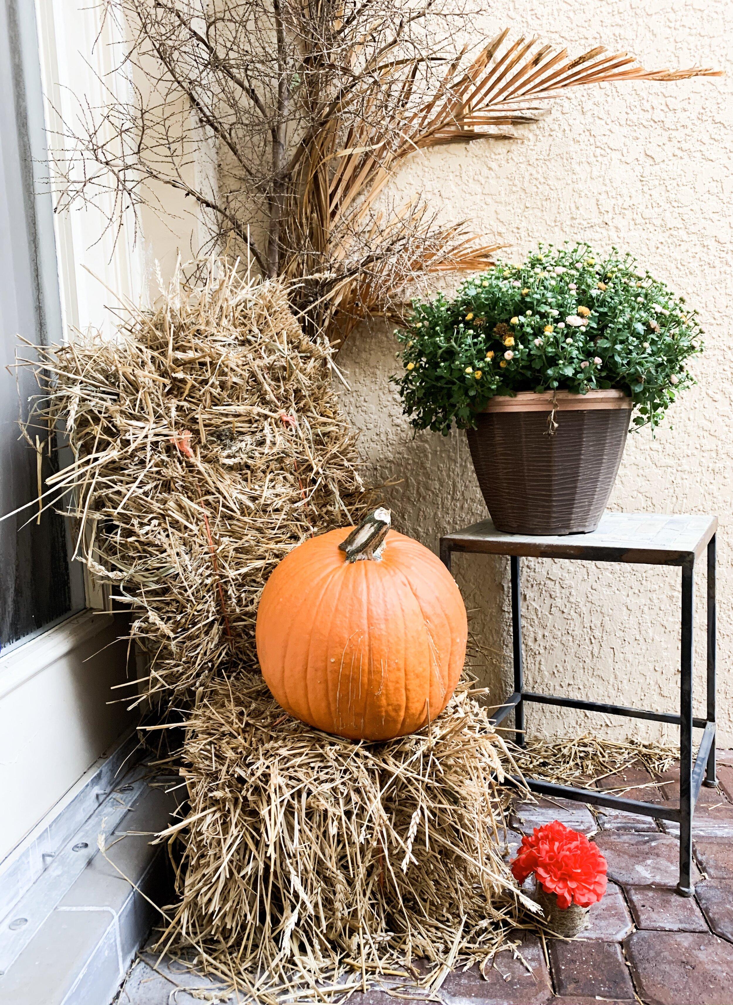 Pumpkins $4.99 from Winn-Dixie