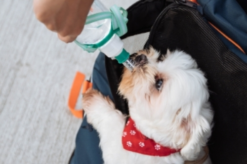 TIP: Take water from your home, or bottled water to serve to your pet during the trip. This may help keep your pet calm and prevent them from getting sick from an unfamiliar water source.