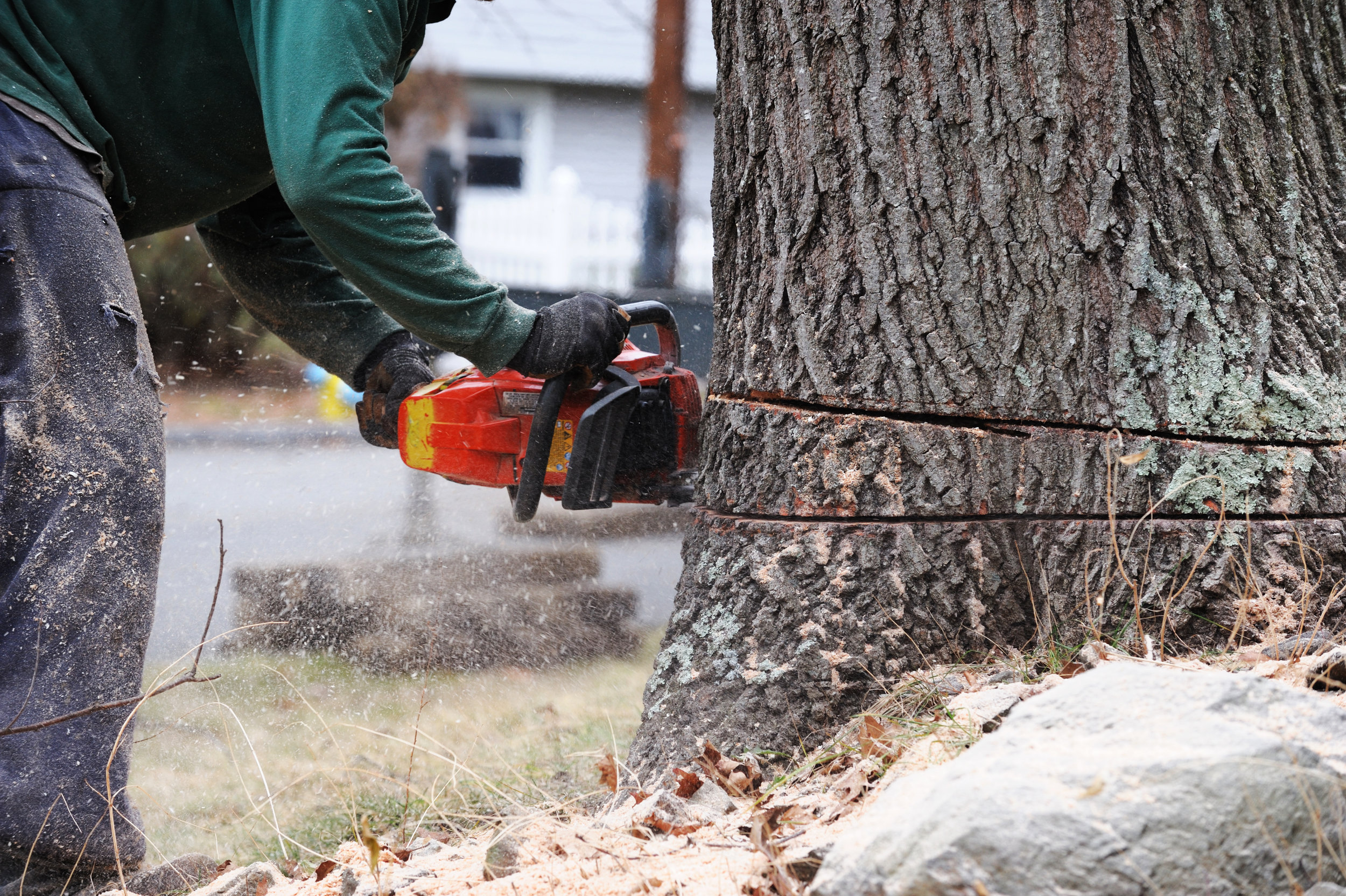 FELLING AND TREE REMOVAL -