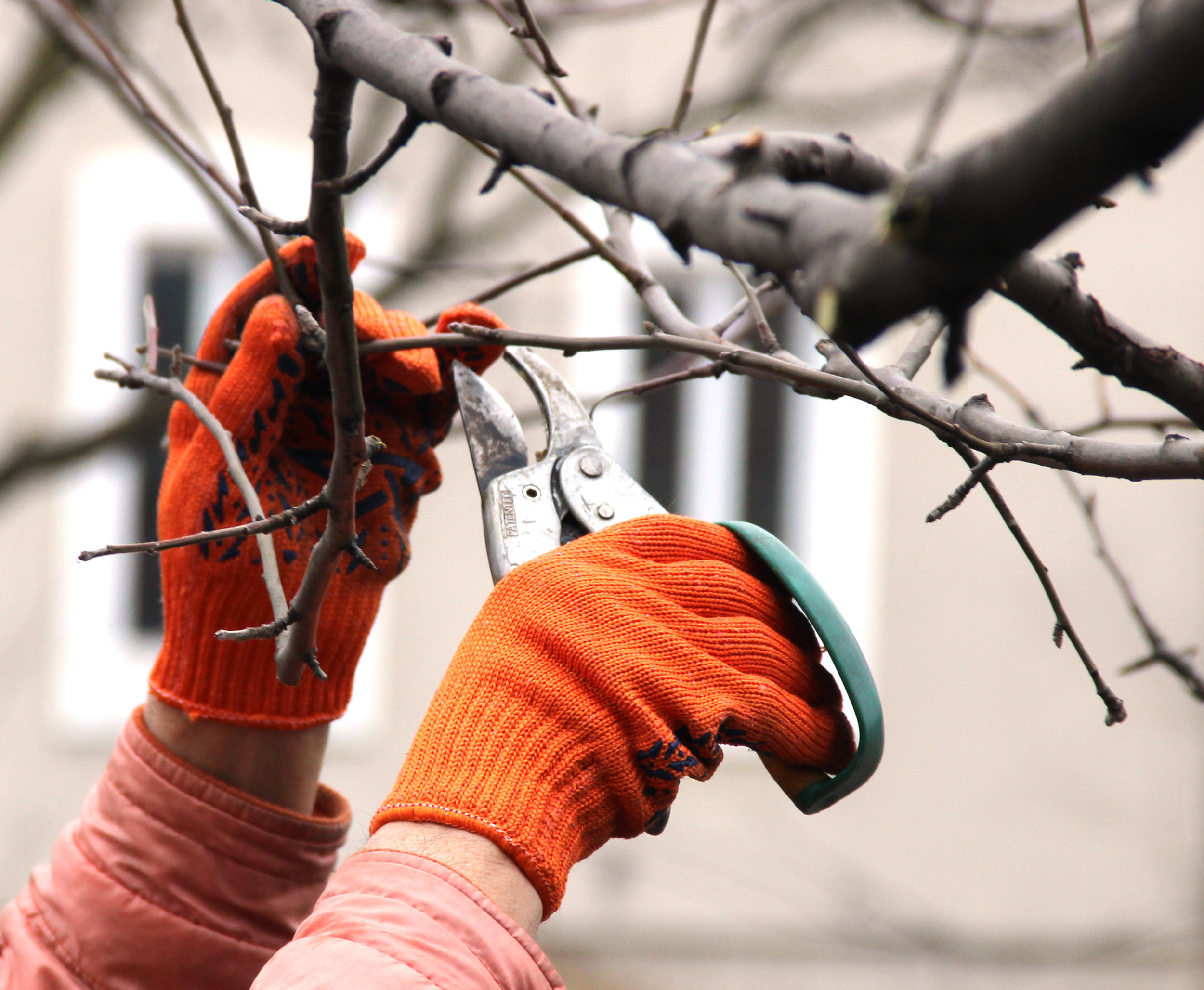 SMALL TREE MAINTENANCE AND PRUNING -