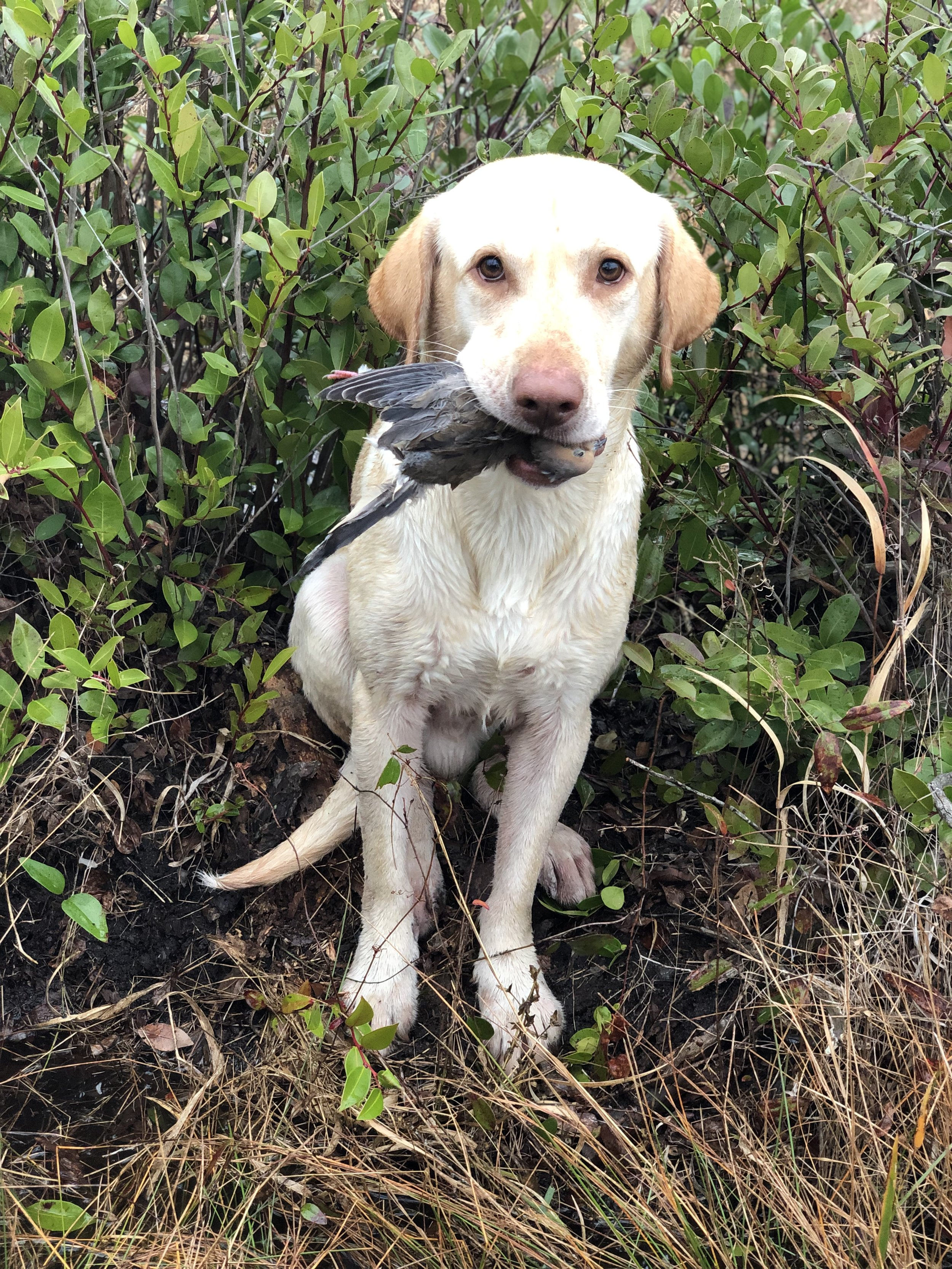 A Dove-turned Duck Hunt - Click to read!
