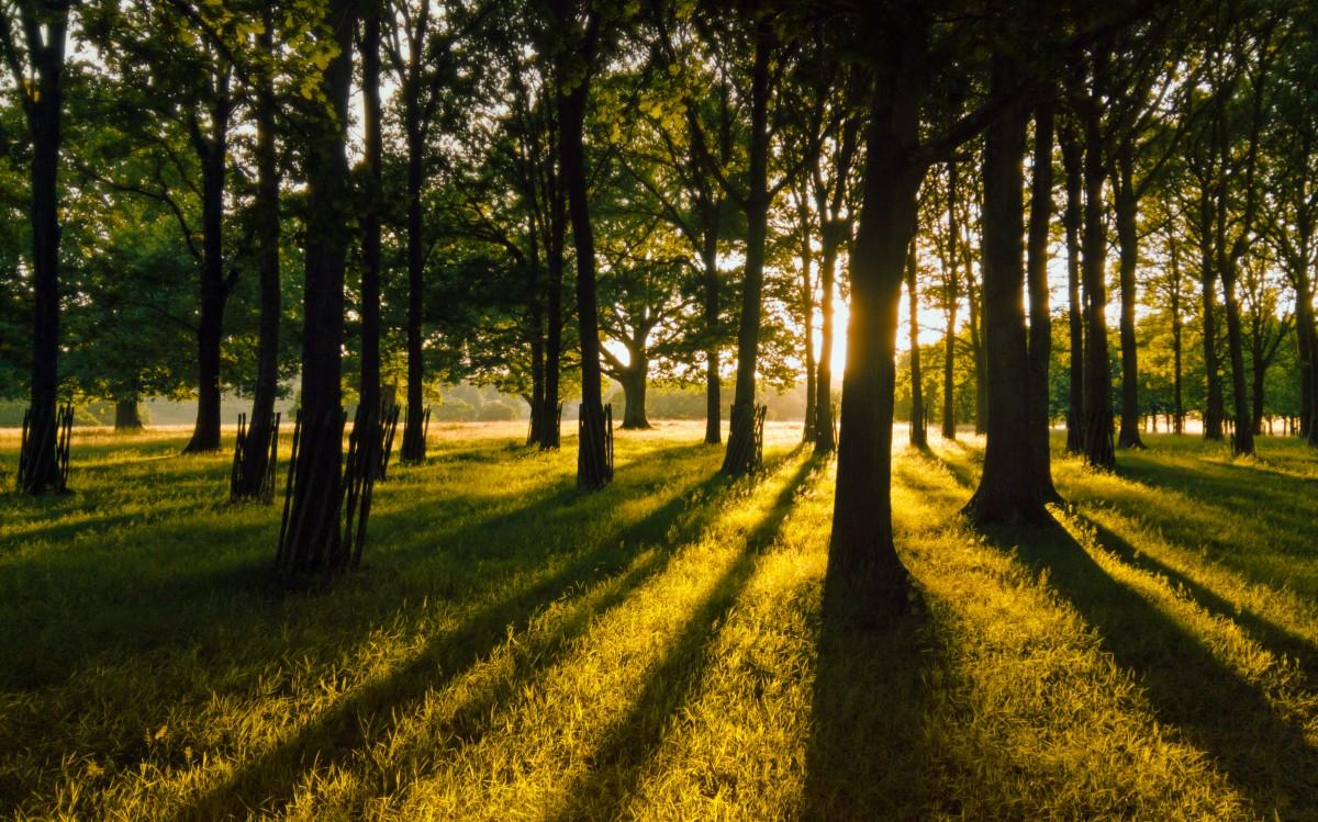 park_trees_light_sunset_summer_tree_green_nature-314166.jpg