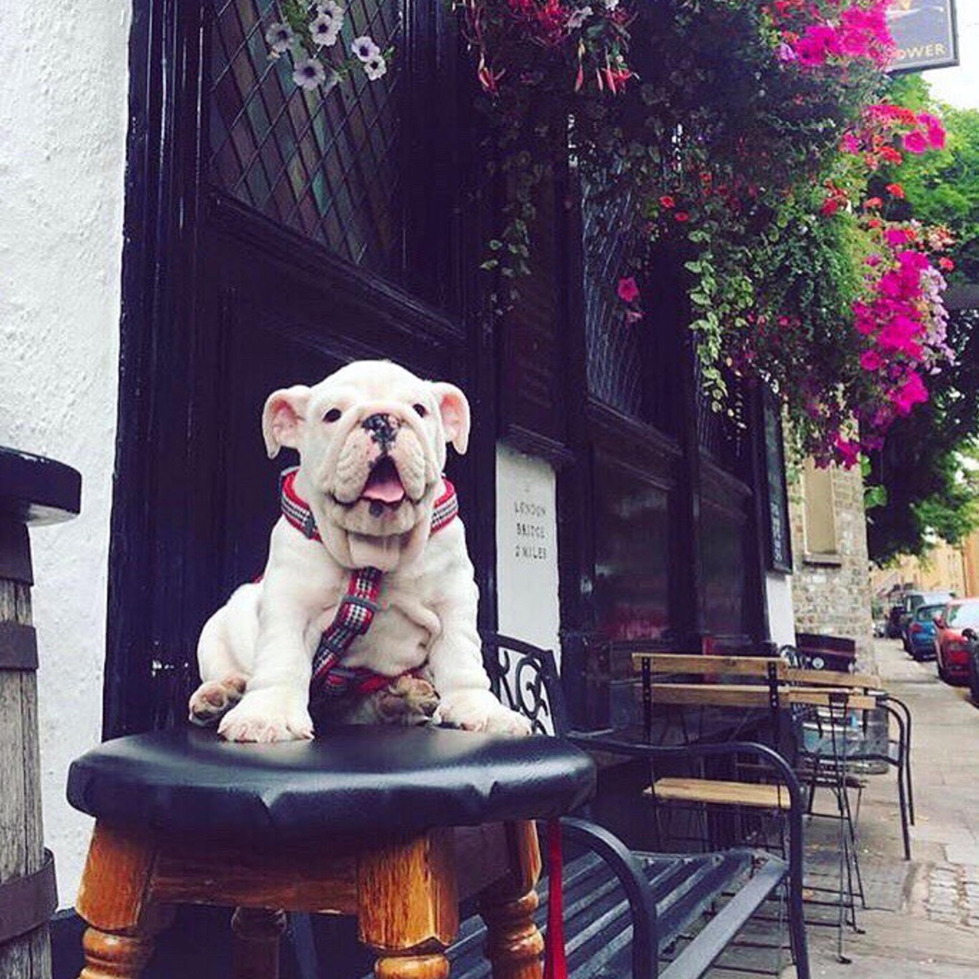 Dog-friendly pub London UK