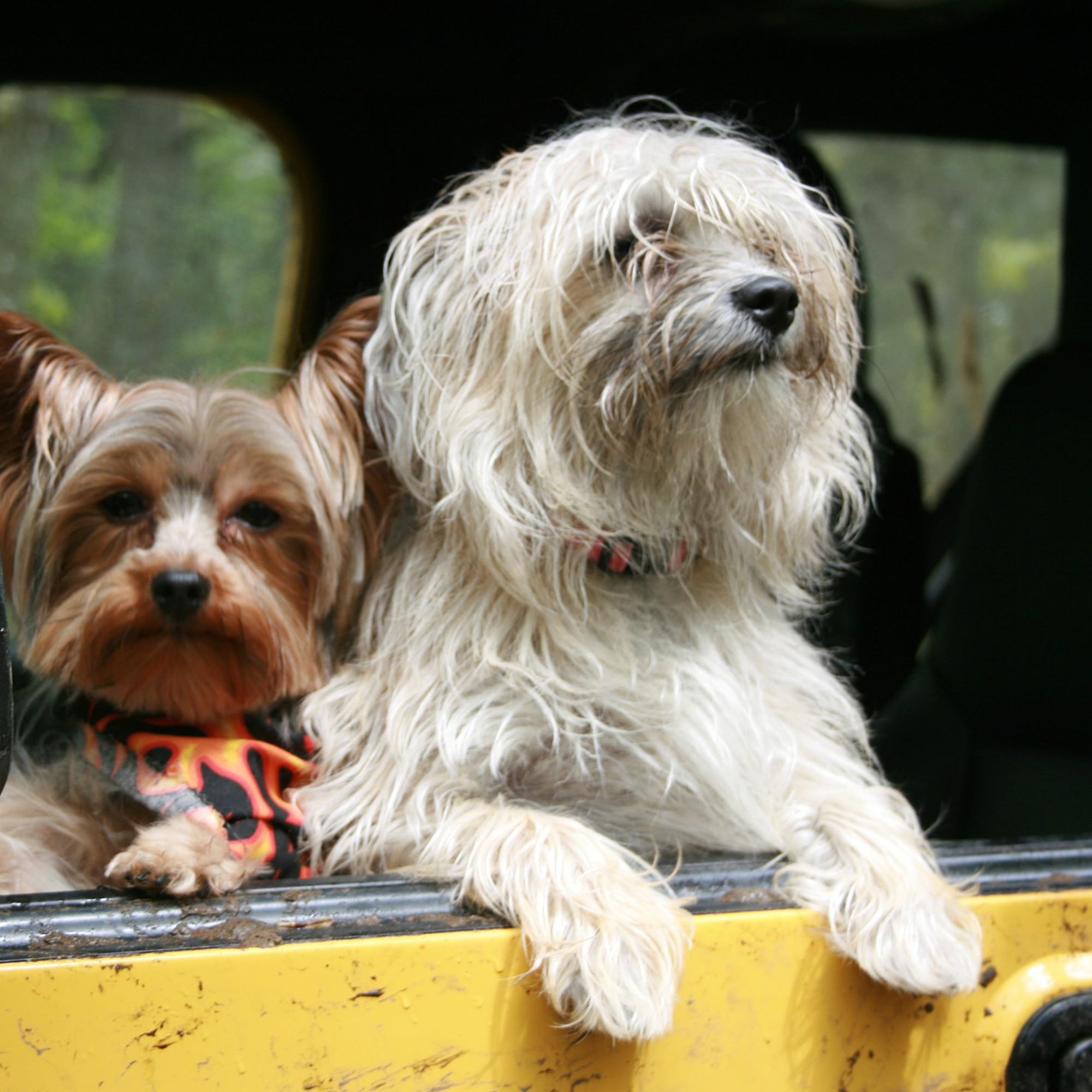 Carpool dog travel dog friendly abroad