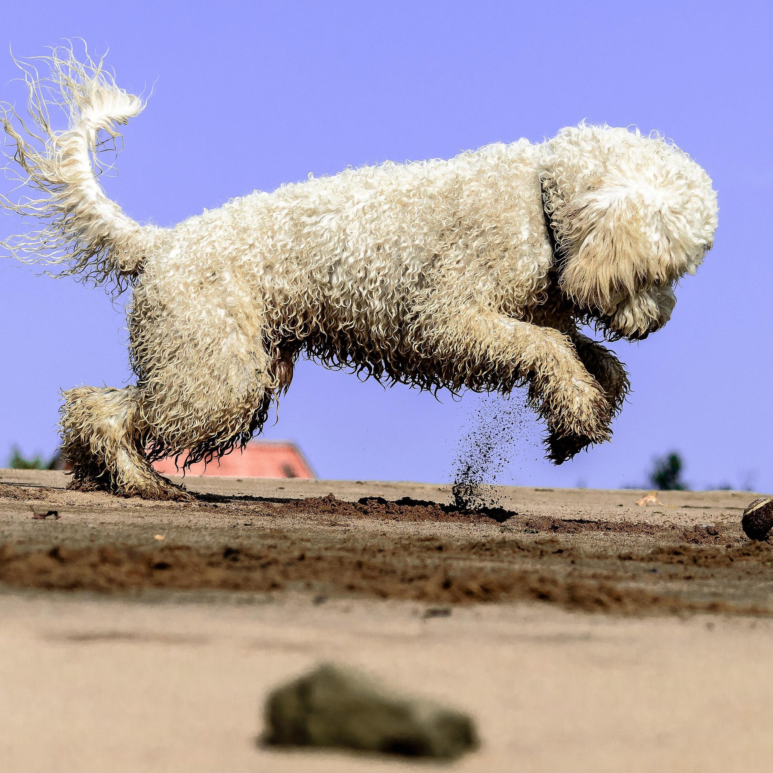 dog-friendly paris chiens paris france dog friendly