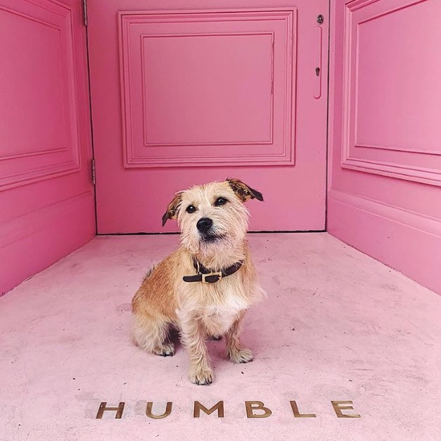 Our #dogbassador @goji_vonb photographed by his mama @natashahzlee at @humble.pizza a plant-based pizza restaurant in #London . What we love the most about them is how they are cruelty-free and #dogfriendly send us your favourite dog-friendly discoveries! 🍕🍕 #Italydogfriendly #travel dogfriendlypub #dogfriendlylondon #dogfriendlyhotel #londonpub #dogfriendlyitaly #pub #london #dogfriendlyrestaurant #dogfriendlycafe #dachshund #chihuahua #terrier #viajarconperromola #bulldog