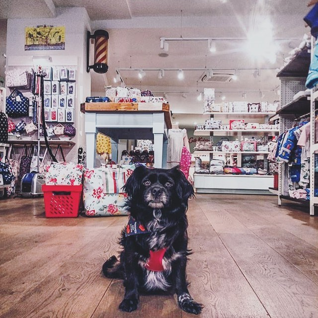 Look how cute is @savingiris at @cathkidston in #Brighton . This #dogfriendly gift store sells the best of home decor in town, also, all of their stores across the UK are dog-friendly so, what are you waiting to visit your local one? ⭐️💃🏻🥍💋🐶😱 dogfriendlybrighton #travel dogfriendlypub #dogfriendlylondon #dogfriendlyhotel #londonpub #dogfriendlyitaly #pub #london #dogfriendlyrestaurant #dogfriendlycafe #dachshund #chihuahua #terrier #viajarconperromola #bulldog #rescuedog