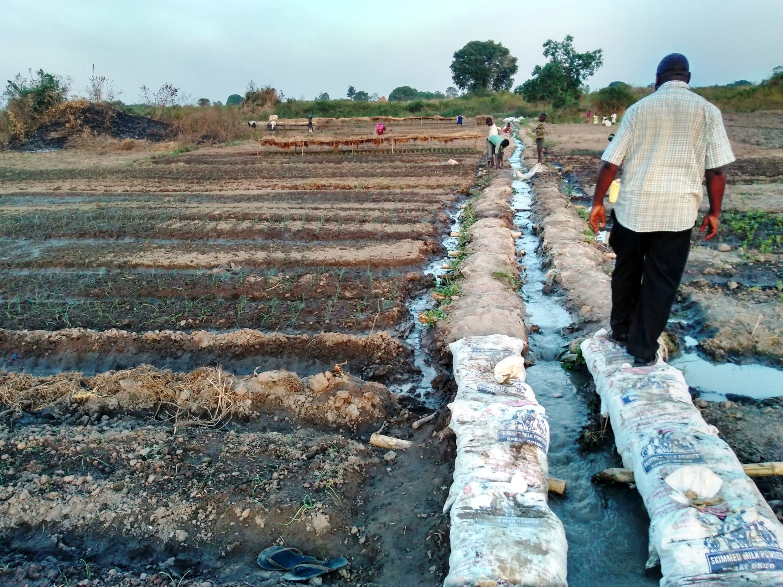 The raised and terraced main canal, constructed of bags filled with soil and lined to reduce seepage, runs down the slope within the irrigated vegetable plots. Members of the irrigation group contribute towards the maintenance of this shared system and get, in return, a plot within the irrigable area where they can grow vegetables.