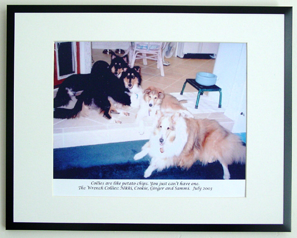 southland collie rescue-adopt collies southern california3.jpg