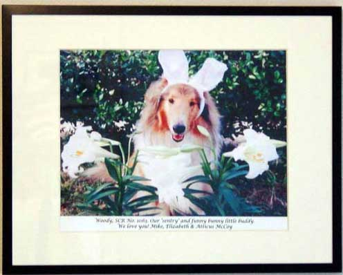 southland collie rescue-adopt collies southern california4.jpg