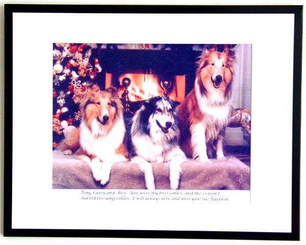 southland collie rescue-adopt collies southern california9.jpg