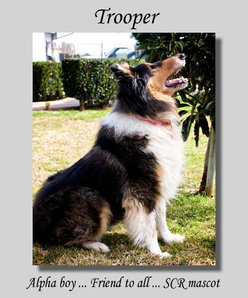 southland collie rescue-adopt collies southern california10.jpg