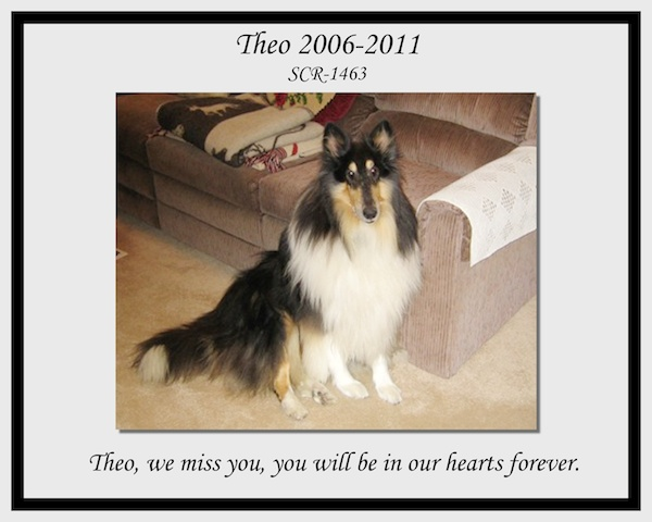 southland collie rescue-adopt collies southern california12.jpg