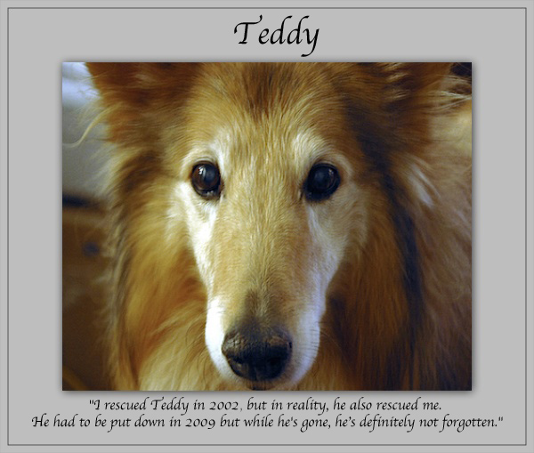 southland collie rescue-adopt collies southern california13.jpg