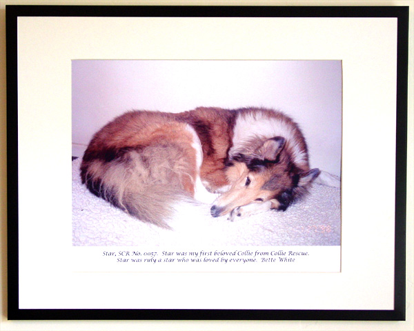 southland collie rescue-adopt collies southern california16.jpg