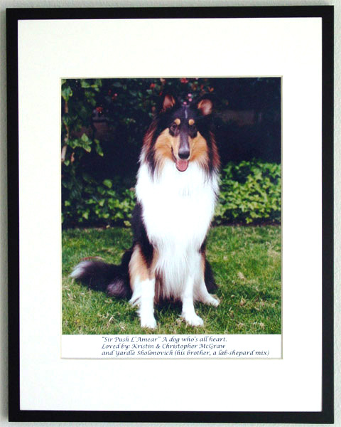 southland collie rescue-adopt collies southern california18.jpg