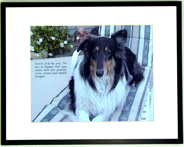 southland collie rescue-adopt collies southern california20.jpg
