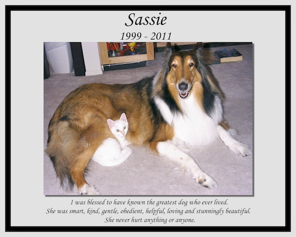 southland collie rescue-adopt collies southern california22.jpg