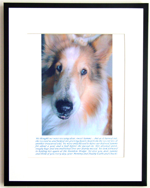 southland collie rescue-adopt collies southern california24.jpg