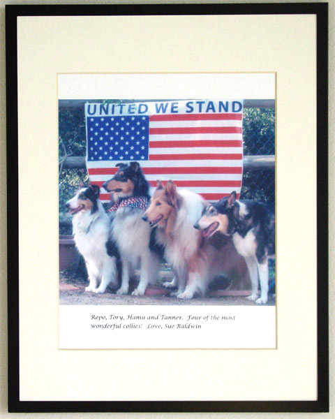 southland collie rescue-adopt collies southern california27.jpg