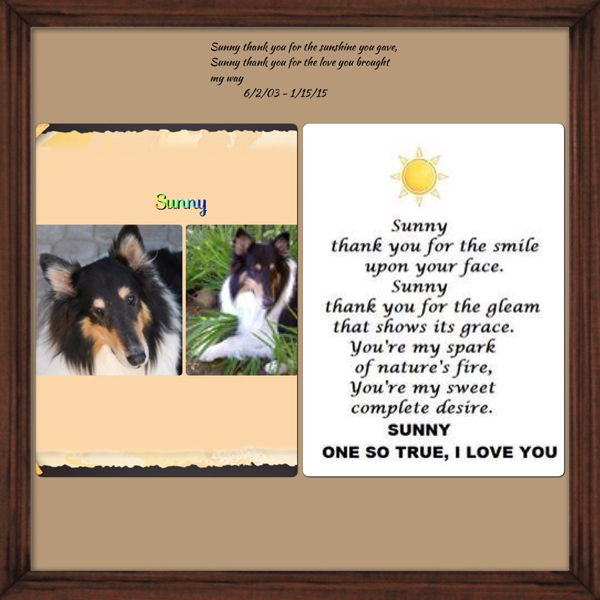 southland collie rescue-adopt collies southern california30.jpg