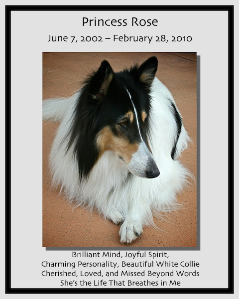 southland collie rescue-adopt collies southern california32.jpg