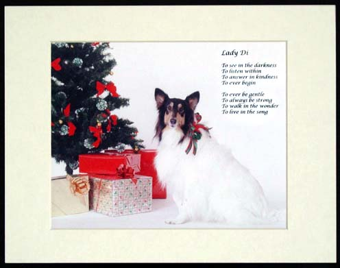 southland collie rescue-adopt collies southern california35.jpg