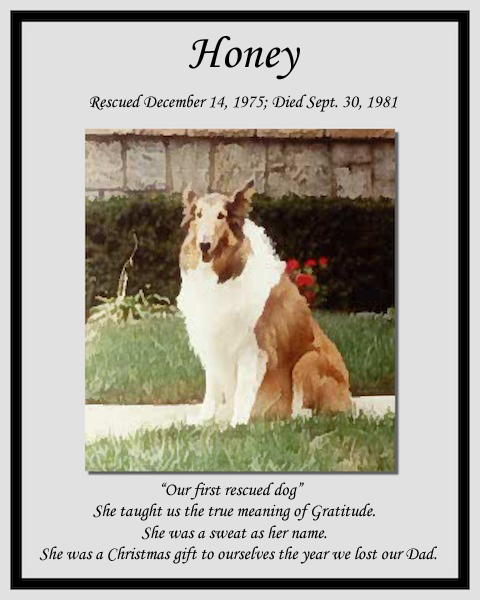 southland collie rescue-adopt collies southern california37.jpg