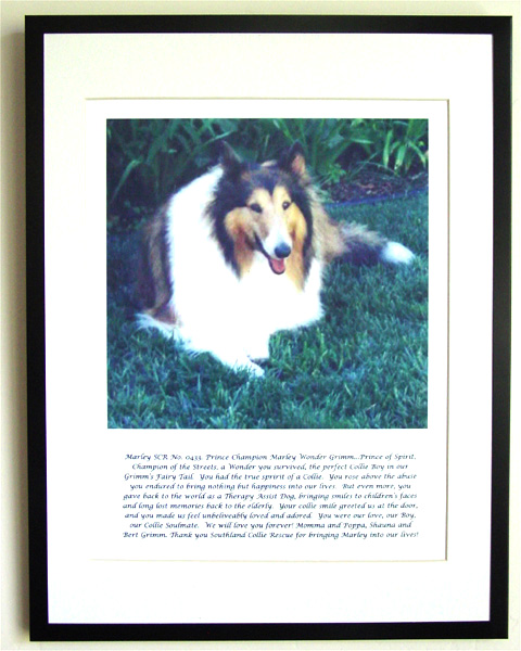 southland collie rescue-adopt collies southern california41.jpg