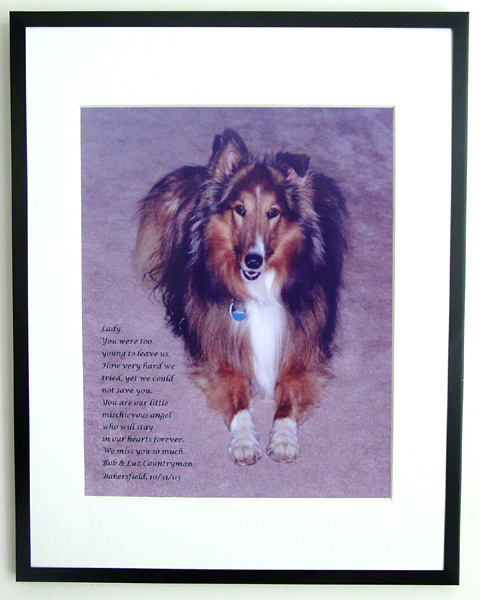 southland collie rescue-adopt collies southern california44.jpg
