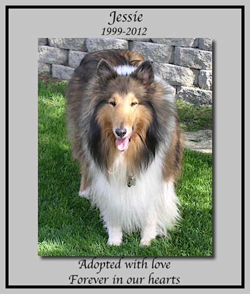 southland collie rescue-adopt collies southern california50.jpg