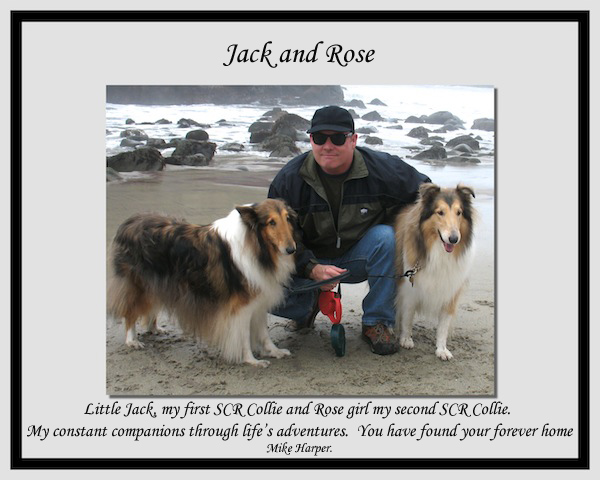 southland collie rescue-adopt collies southern california52.jpg