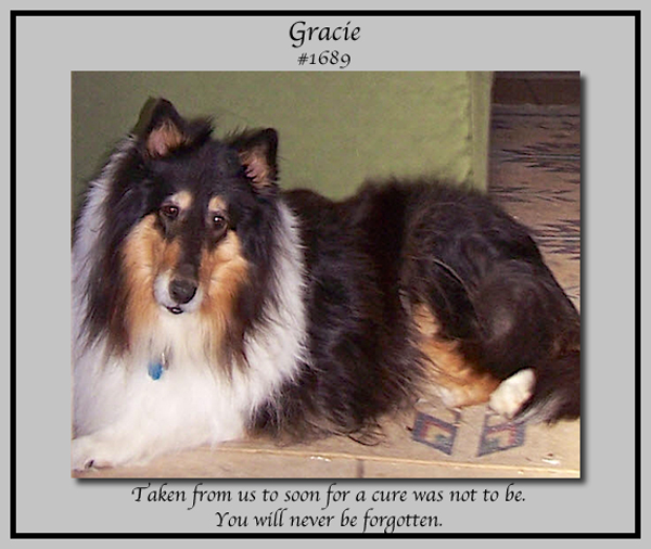 southland collie rescue-adopt collies southern california54.jpg