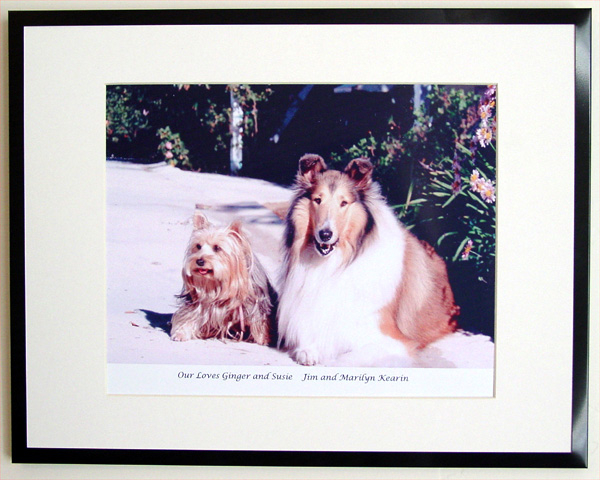 southland collie rescue-adopt collies southern california55.jpg