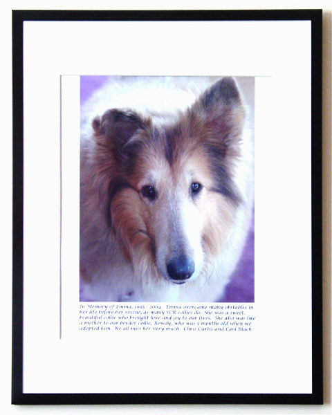 southland collie rescue-adopt collies southern california58.jpg