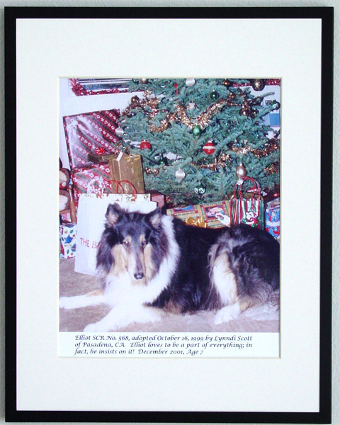 southland collie rescue-adopt collies southern california60.jpg