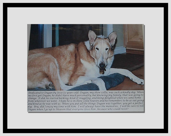 southland collie rescue-adopt collies southern california61.jpg