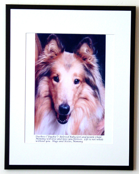 southland collie rescue-adopt collies southern california62.jpg