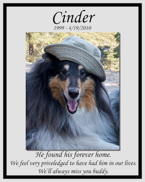 southland collie rescue-adopt collies southern california68.jpg