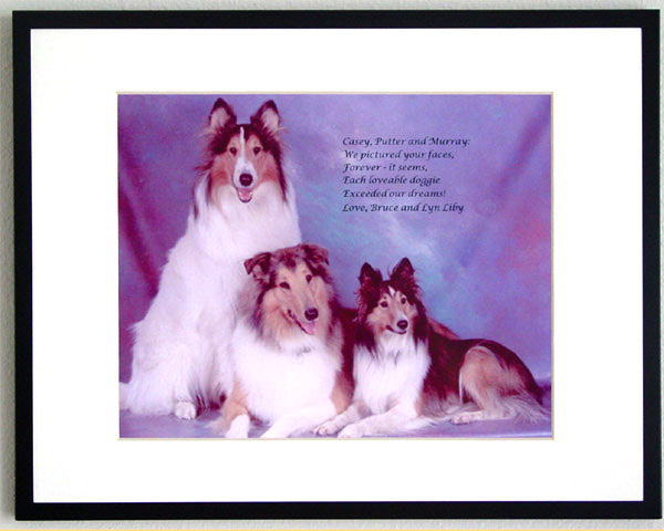 southland collie rescue-adopt collies southern california72.jpg