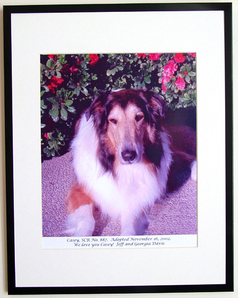 southland collie rescue-adopt collies southern california73.jpg