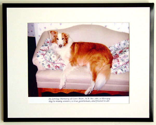 southland collie rescue-adopt collies southern california76.jpg