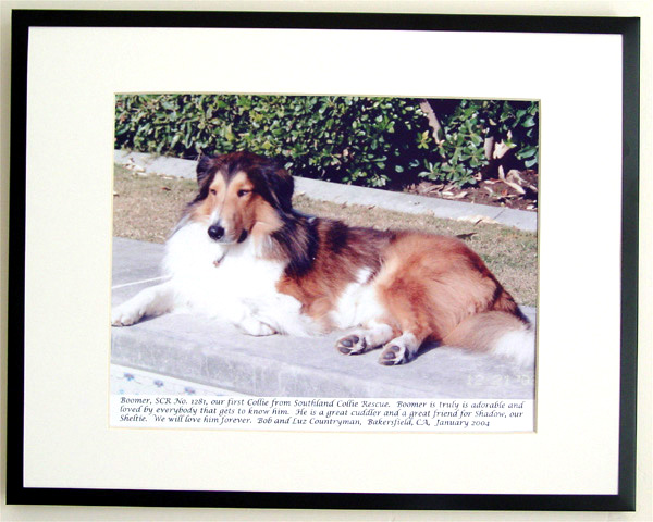 southland collie rescue-adopt collies southern california80.jpg
