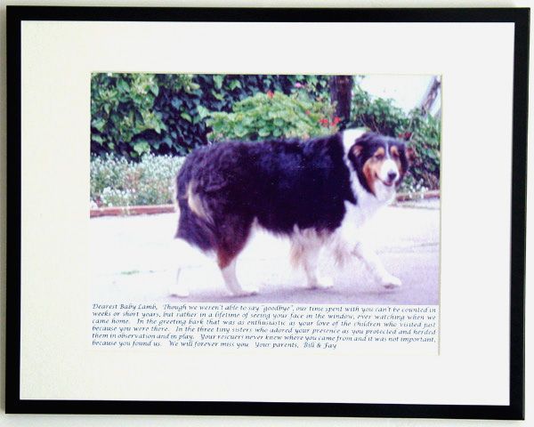 southland collie rescue-adopt collies southern california86.jpg