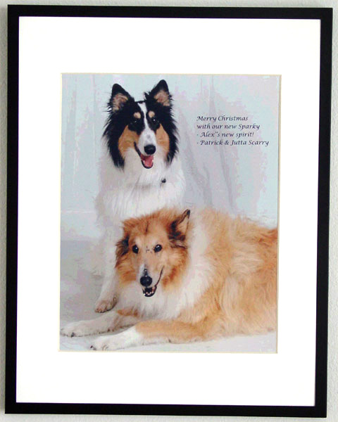 southland collie rescue-adopt collies southern california88.jpg