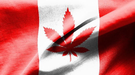 fewer-than-half-of-canadians-now-support-cannabis-legalization-311667.jpg