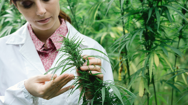 cannabis-research-is-ignoring-women-says-study-311740.png