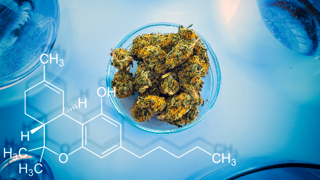 beyond-bud-meet-the-leaf-free-future-of-cannabis-production-311778.png