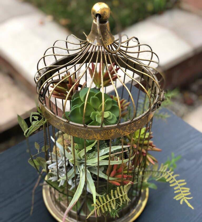 Succulents in Cage.jpg